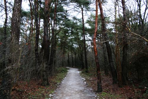 550 - woods