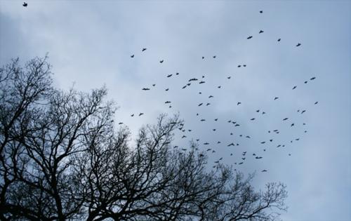 550 - Birds